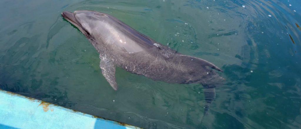 越前松島水族館はイルカが目の前にやってくる