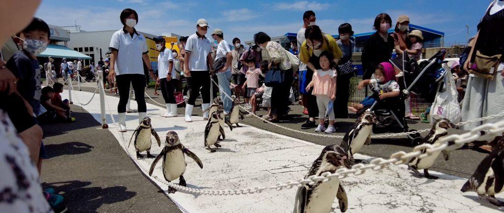 越前松島水族館はペンギンが歩く