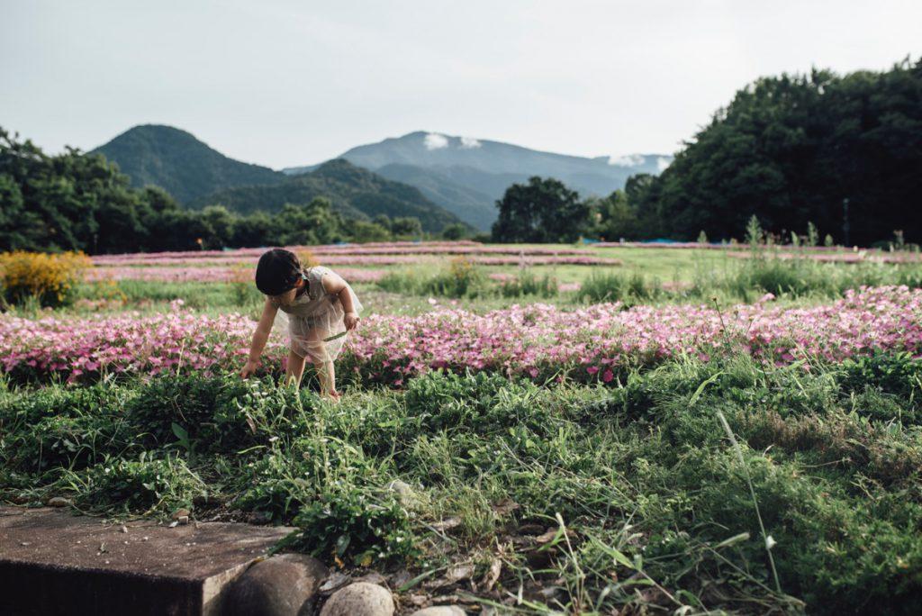 国営アルプスあづみの公園のお花