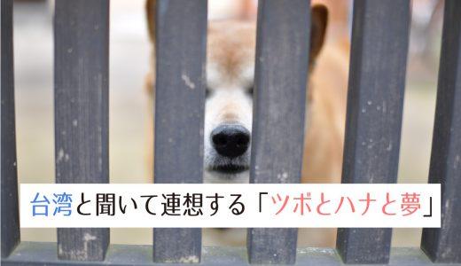 我が家に笑顔を届けてくれた柴犬ハナと、台湾で買った大きなツボ